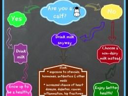 should you drink milk? flowchart infographic