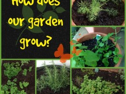 how does our garden grow