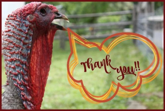sponsor a turkey thank you https://www.vegetarianzen.com