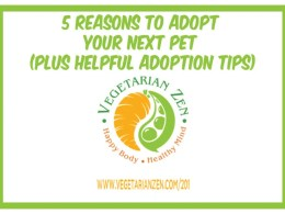 Vegetarian Zen podcast 5 reasons to adopt your next pet plus adoption tips