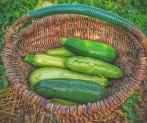 squash for our vegetable enchiladas recipe
