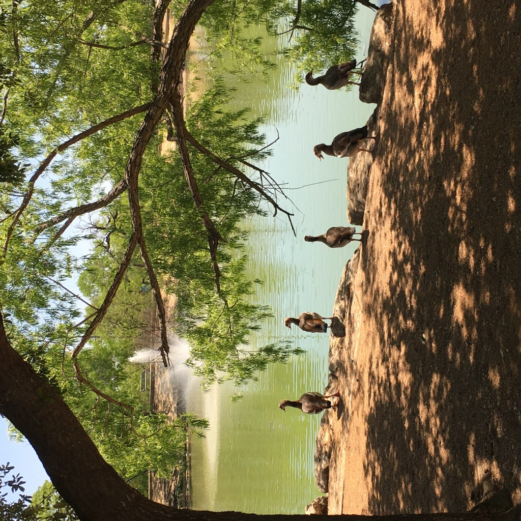 a duck pond is a great way to spend earth day