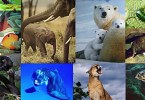 Biodiversit__animale_copie