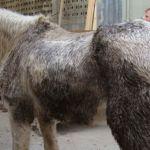 cavalli-maltrattati-big-beta-2