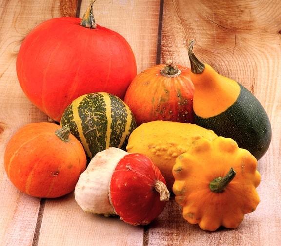 Squash varieties