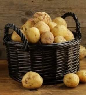 Golden potatoes in basket