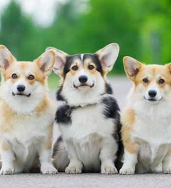 Three cute dogs