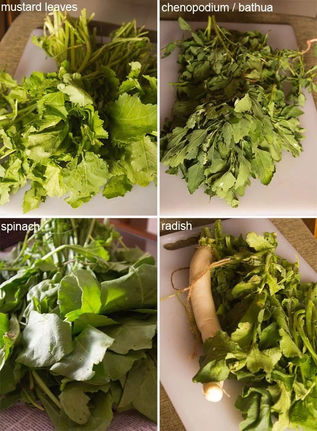mustard, bathua (also known as chenopodium in english), spinach, radish and fenugreek