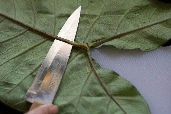 remove thick veins from colocasia leaves