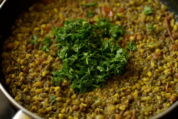 coriander for mixed sprouts curry recipe