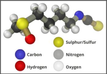 Sulforaphane Molecule