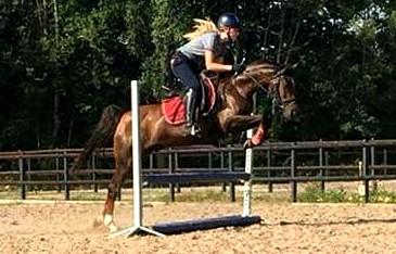 Kavel 43: 10 jarige sport d-pony ruin