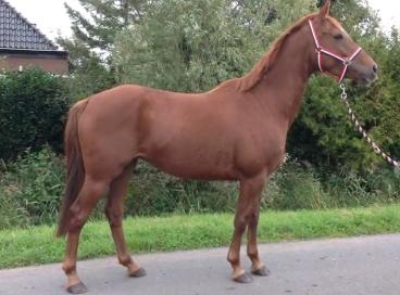 034. Spring e-pony/klein paard
