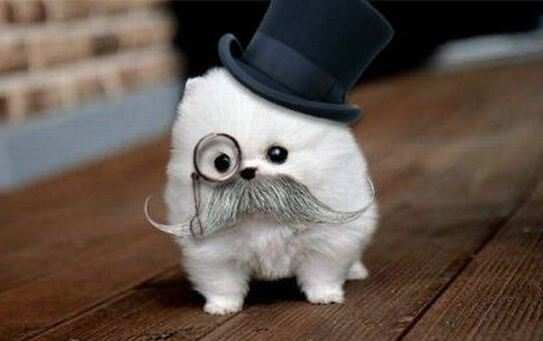 Sir Fluffypants.