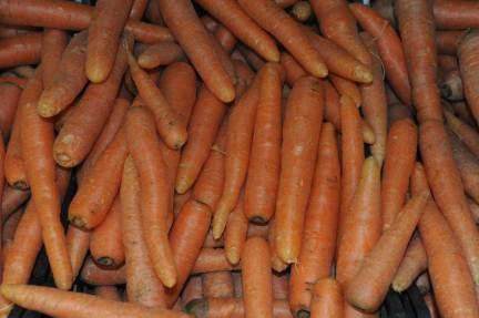 verdure-con-radici-carote.1000