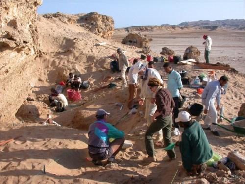 Boston University Wadi Gawasis Project