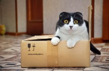 Ako zabaliť balík z UK na Slovensko?