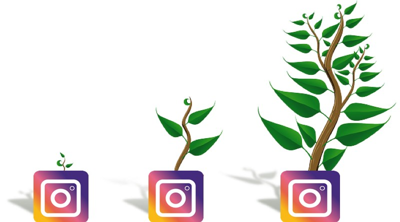 How To Grow Your Followers Organically On Instagram