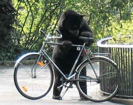 bear_with_bike_stand-460x366