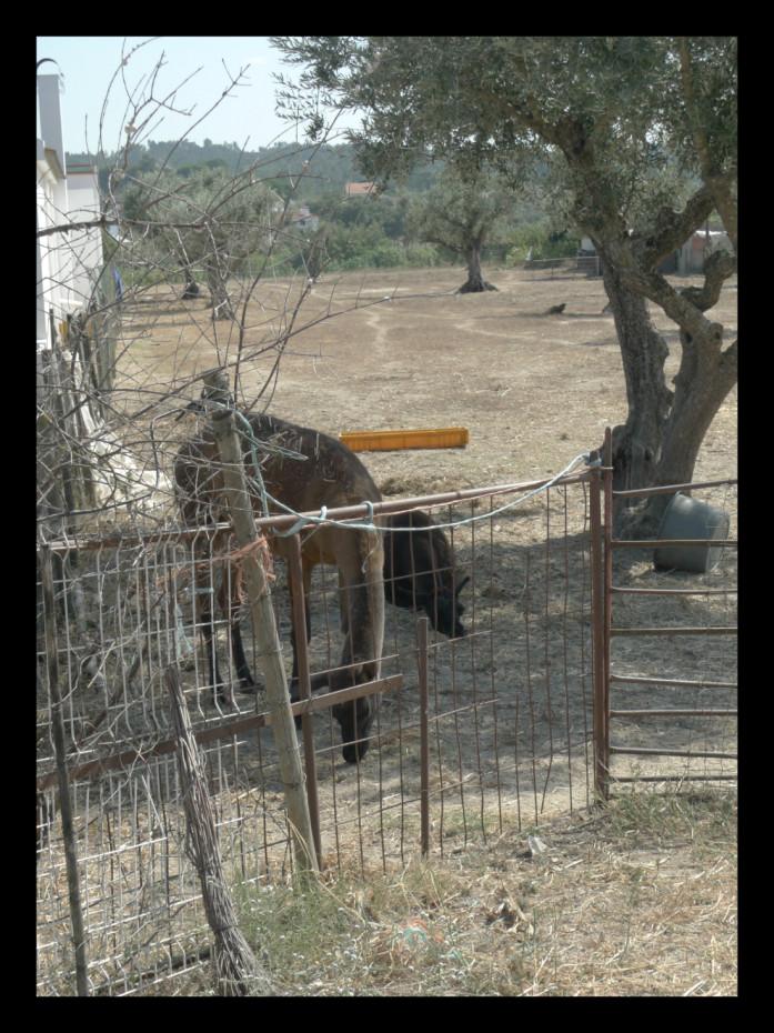 O calor apertava, e jurei ver Lamas.