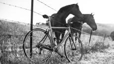 velodramatic_events-1eulogy_horses-7050
