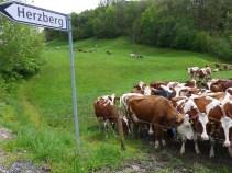 140509_aargauer_runde_17