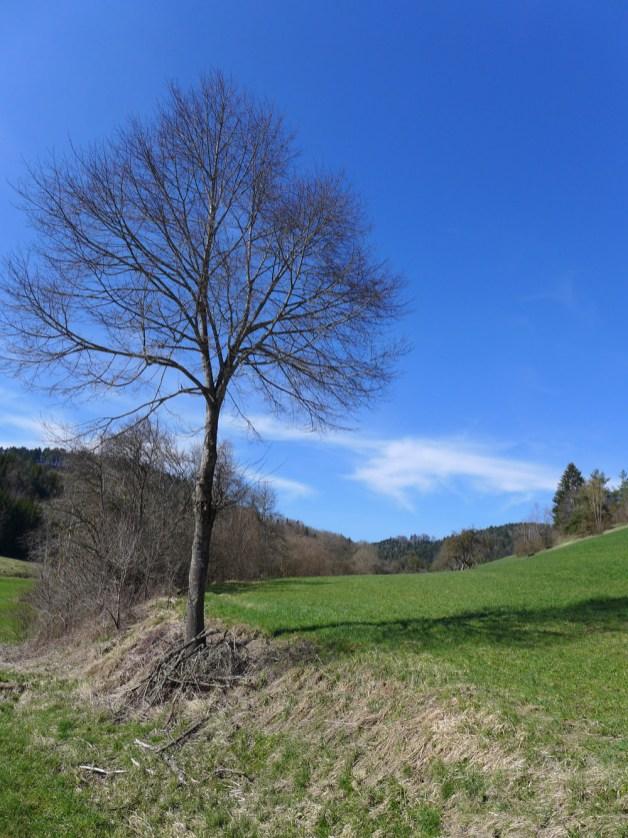150409_schwarzwald_19