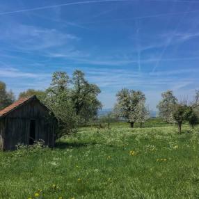 Das Frühlings-Bluescht-Wunder, hier bei Schongau. | © 2018 Dominik Thali