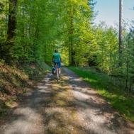 Durch den Frühlingswald kurz vor Schloss Liebegg.   © 2018 Dominik Thali