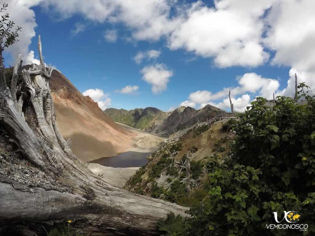 Árvores centenárias reduzidas a troncos e cinzas e a natureza que se recompõe