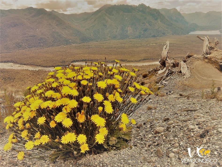 As flores que agora enfeitam a paisagem
