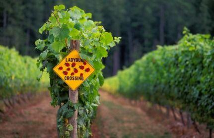 O que é vinho orgânico?