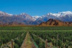 Vinho chileno_2