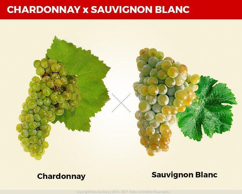 Chardonnay e Sauvignon Blanc: aprenda como diferenciar os dois vinhos!