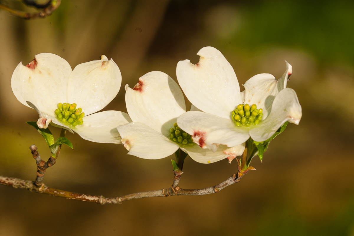 A Bouquet for Arbor Day - Venerable Trees