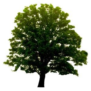 VenTreesLogo_Tree600