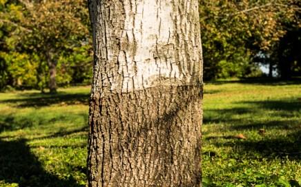 Friday Tree