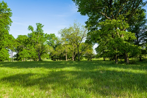 Woodland Pasture, Rutherford County, Tennessee