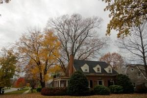 riparian oak