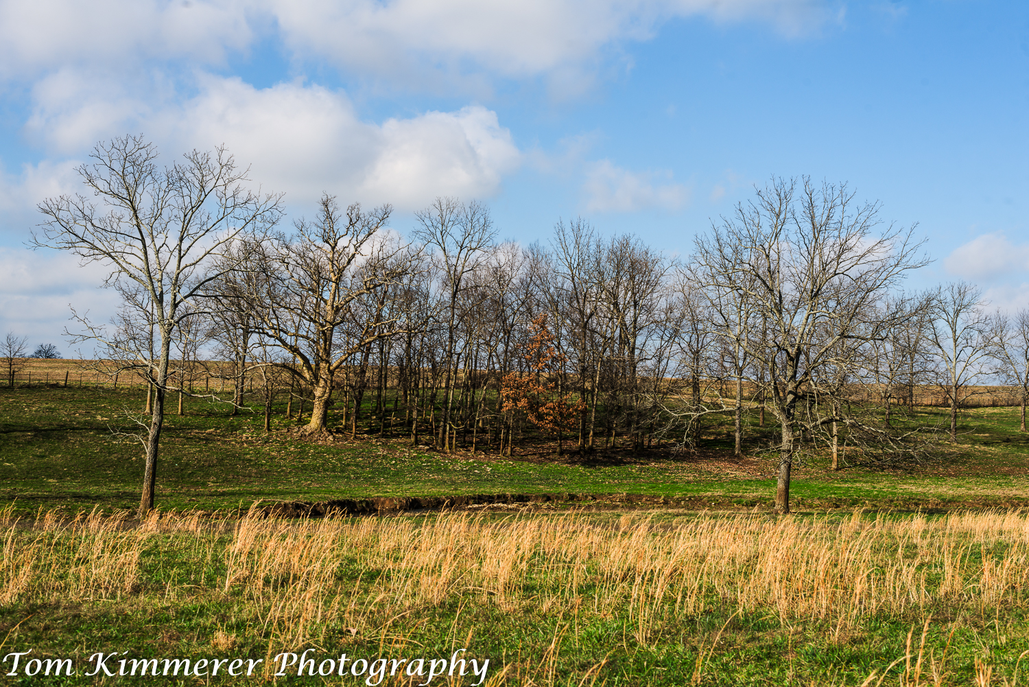 Young woodland pasture
