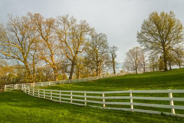 A woodland pasture, Jessamine County, Kentucky