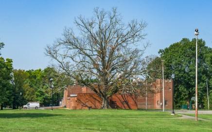 Lightning struck tree