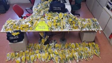 Festa della Donna oltre 1400 mazzi di mimose sequestrati