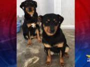 Roberto Martano parte del Rifugio Enpa di Mira ci porta a conoscere 3 cagnolini abbandonati e che ora sono disponibili per l'adozione