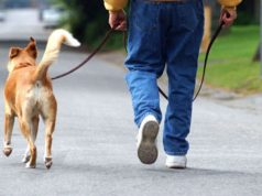 Patentino per i proprietari di cani: iscrizioni aperte al corso