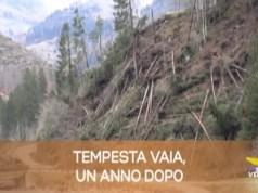 TG Veneto: le notizie del 28 ottobre 2019