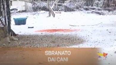 TG Veneto: le notizie del 12 dicembre 2019