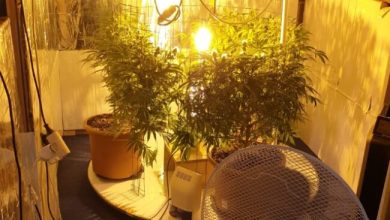 Cavallino Treporti: coltiva marijuana, denunciato 29enne