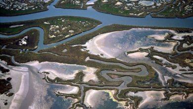 Barene della Laguna Nord: un progetto per recuperare 95 ettari