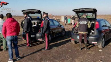 Lavoro nero: denunciato titolare di un'azienda agricola di Musile - Televenezia
